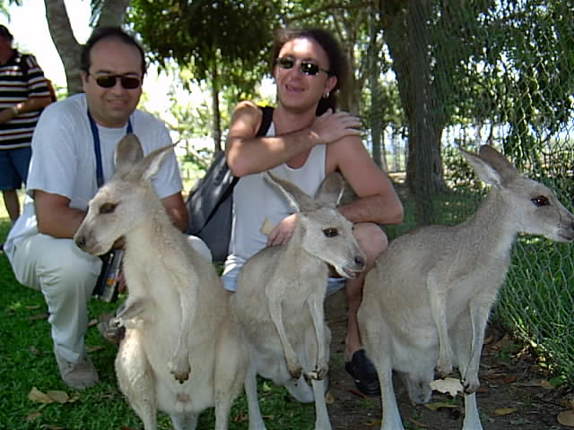 QUEENSLAND - AUSTRALIA - Luigi e i canguri